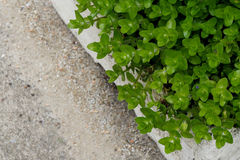 Focus is on green plants in white clay pots and blur sand background. Copy space Stock Photography