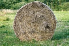 A bale of hay in the foreground in the countryside, a cow food, a farm, a beautiful natural background stock image