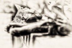 Focus on the head of tabby cat sleeping outdoors Royalty Free Stock Images