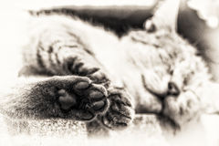 Focus on the hind paw of tabby cat sleeping outdoors Royalty Free Stock Images