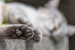 Focus on the hind paw of tabby cat sleeping outdoors. In foreground focus on the hind paw of an adult tabby cat sleeping lengthened on a low wall. Portrait of royalty free stock photography