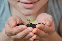 Focus on Little seedling in black soil on womans hand. Earth day and Ecology concept. Stock Images