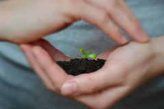 Focus on Little seedling in black soil on womans hand. Earth day and Ecology concept. Stock Image