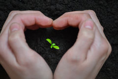 Focus on Little seedling in black soil on womans hand. Earth day and Ecology concept. Stock Photo
