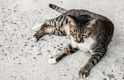 Focus lonely feeling face of stray cat outdoors. Sleeping on the Royalty Free Stock Photography