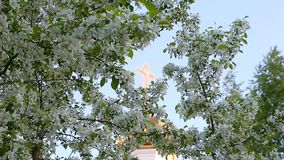 Focus movement from golden cross of church dome to white flowers of blossom apple-tree branches. Green garden and worship place in city garden. View cross stock video footage