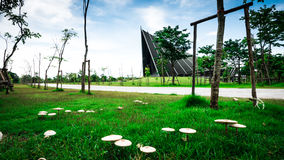 Focus mushroom and Prince Mahidol Hall Background. Royalty Free Stock Photo