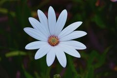 Focus Photo of White Petaled Flower Royalty Free Stock Photos