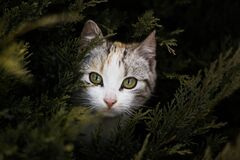 Focus Photography of Gray Orange and Black Kitten Beside Green Plant Stock Photo
