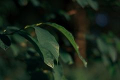 Focus Photography of Green Leaf Plant stock image