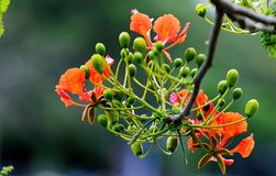 Focus Photography of Orange and Green Flowers Stock Photo