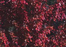 Focus Photography Red Leaf Tree Stock Photo