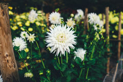 Focus Photography of White Petaled Flower Stock Photography