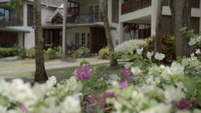 Focus play with flowers and resort. A tilting up shot of focus pulled from the flower garden foreground to the resort bungalow background stock footage
