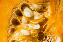 Focus on pulp and seeds of orange pumpkin with macro lens Stock Photography