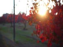 Focus on red lambusco vineyard stock video