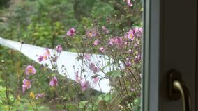 Focus shift through glass to outside plants. Focus shift from inside a glass door to outside with purple flowers and garden stock footage