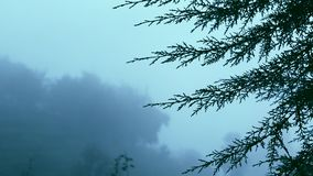 Focus Shift of tree leaf, moving of fog on the mountains in early morning,. Moving of fog on the mountains in early morning at nature background stock video