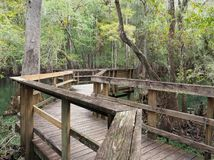 Focus Stacked Image of the Boardwalk at Manatee Springs, Florida royalty free stock image