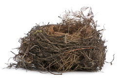 Focus stacking of a Nest of Common Blackbird Royalty Free Stock Image
