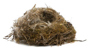 Focus stacking of a Nest of tit Stock Image