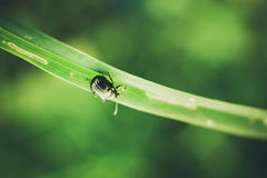 Focus View of Black Insect Stock Images