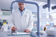 Focused biochemist preparing some medicine. In laboratory royalty free stock photography