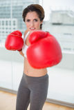 Focused brunette boxing and looking at camera Royalty Free Stock Images
