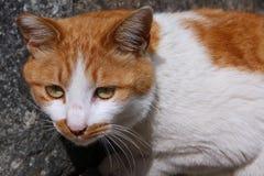 Focused cat Stock Image