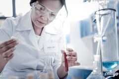 Focused female scientist mixing liquids in laboratory. Future breakthrough. Selective focus on a concentrated chemist holding a pipette and pouring a liquid into Royalty Free Stock Image