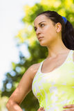 Focused fit brunette in the park Stock Image