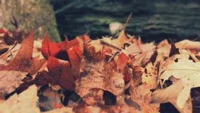Focused leaves Royalty Free Stock Image