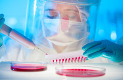 Working in the laboratory with a high degree of protection Royalty Free Stock Photo