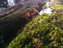 Focused macro photo of some moss Stock Photography