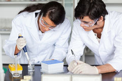 Focused science students making an experiment. In a laboratory Royalty Free Stock Photo