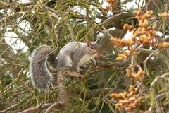 Focused squirrel hiding behind unfocused seeds stock photo