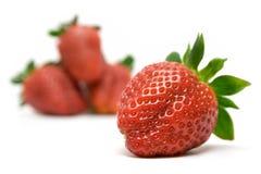 Focused Strawberry Stock Photo