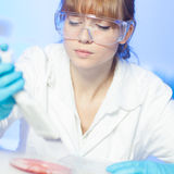 Attractive young scientist pipetting. Stock Photography