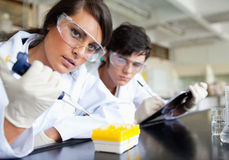 Focused young scientists working. In a laboratory Stock Image