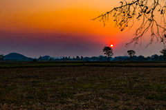Focusthe sun  and Soft Tone Filter :sunset over rice field. Royalty Free Stock Photography