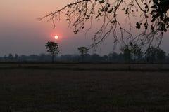 Focusthe sun  and Soft Tone Filter :sunset over rice field. Stock Photos