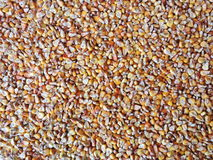 Fodder maize pattern Royalty Free Stock Photos