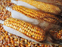 Fodder maize pattern Royalty Free Stock Images