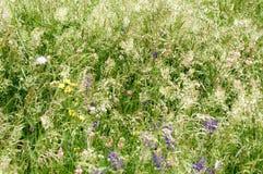 Fodder meadow Stock Photos