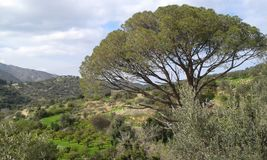 Fodele. Countryside with large tree in foreground.  Crete. Geece Stock Image