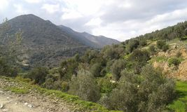 Fodele. Countryside with olive trees.  Crete. Geece Stock Photos