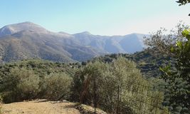 Fodele landscape. Landscape of hills and olive trees around Fodele village. Crete. Greece Royalty Free Stock Photos
