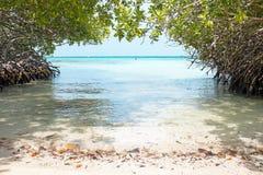FoderbetaHalto strand på den Aruba ön Arkivbilder