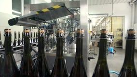 Fodra för påfyllning och att försegla av transportören i en fabrik av champagne stock video