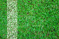 Fodra fotbollfältet. Royaltyfria Bilder